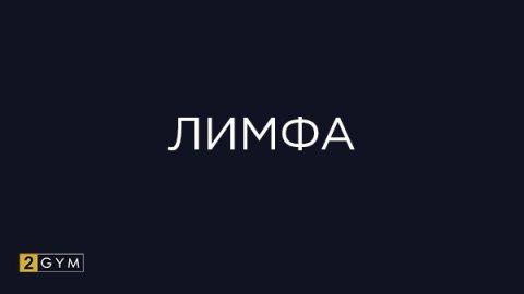 Лимфа: функции и лимфообразование