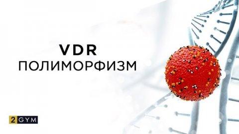 Полиморфизм VDR и что влечет за собой недостаток витамина D?